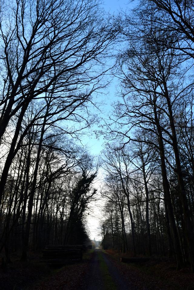 Villecartier Forest, Brittany | www.rachelphipps.com @rachelphipps
