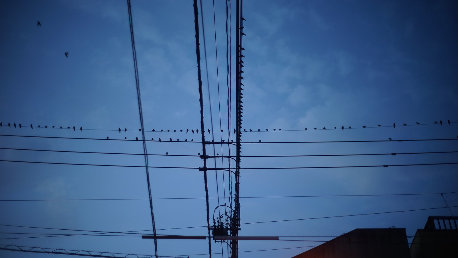 Birds on a wire. #japan15 #Kagoshima #SonyA7 #Voigtlander40mm #foto