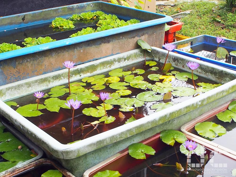 animal corner, farm, farm tour, farmart centre, singapore, where to go in singapore, 农市中心, 農市中心, review,farmart,water lily