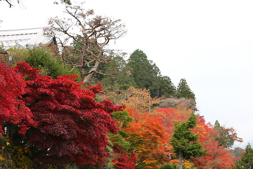 Nikko Koyo Autumn Leaves 2
