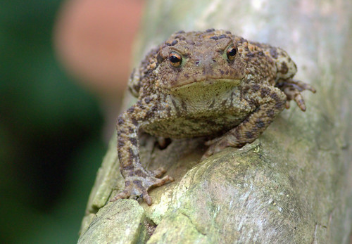 Toad 'Warts n All'
