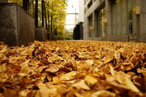 ruelle d'automne