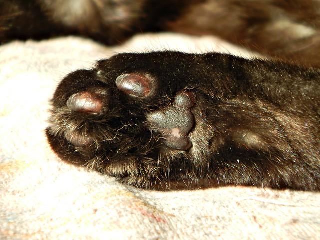 Мусина лапа | cat paw
