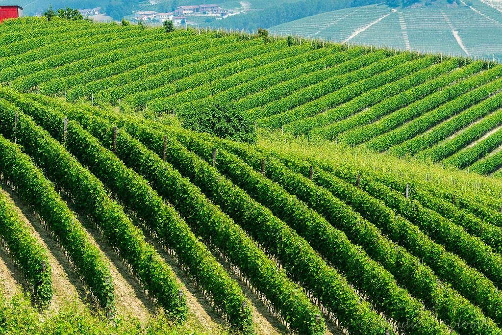 Landscape in Langhe (Piedmont)