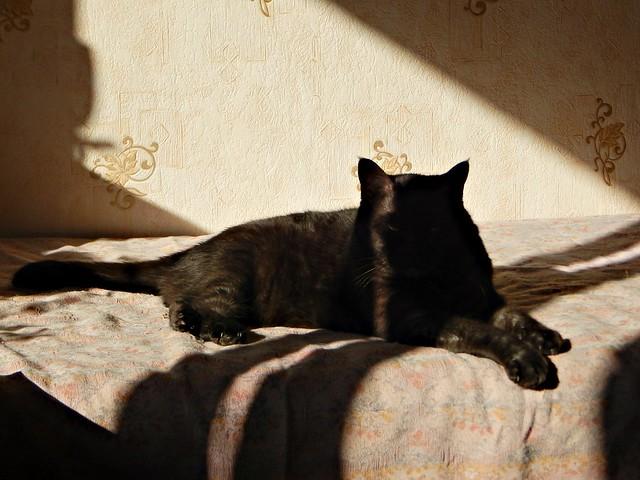чёрный кот Муся на солнце 2 | Musia the black cat
