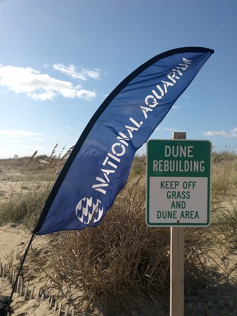 Virginia Beach Dune Restoration