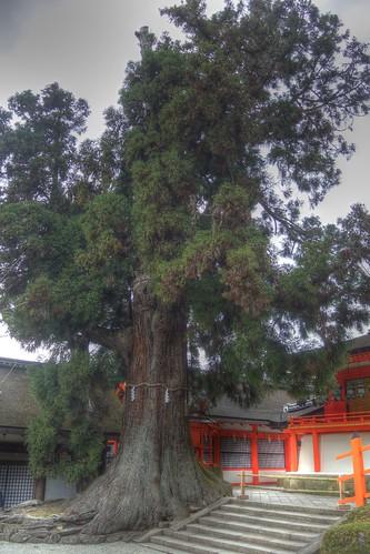 Kasuga Taisya Shrine on NOV 30, 2016 vol02 (14)