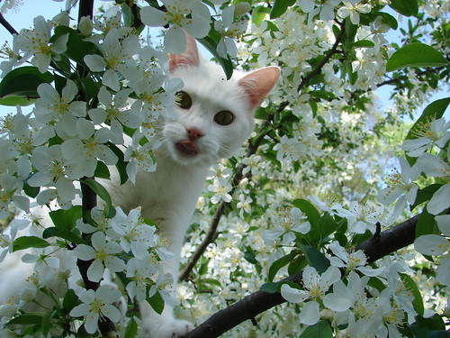 Ooma in the white blossoms | by shannonrossalbers