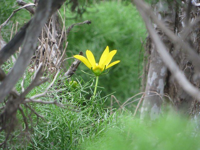 early bloom