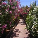 Jardin bio-aromatique de l'Ourika