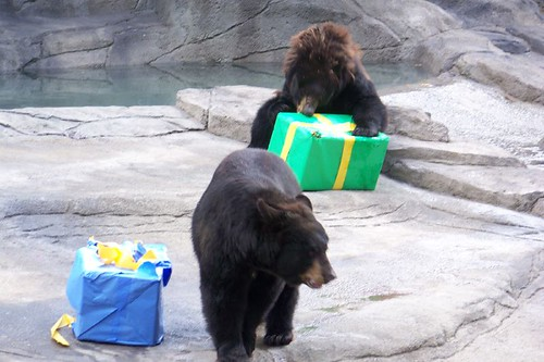 Cleveland Zoos birthday party  this photo was taken this s ...