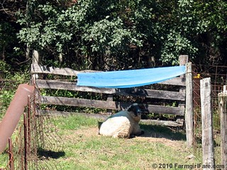Big Teddy Under His Personal Shade Device | by Farmgirl Susan