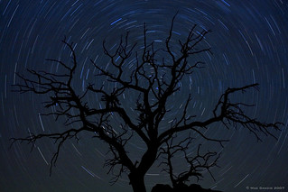 dead tree polaris | by Mac Danzig Photography