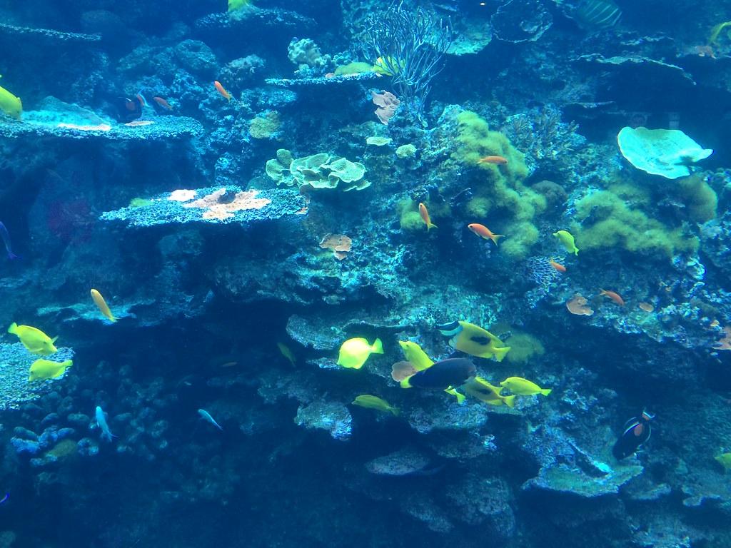 Tropical Diver 2