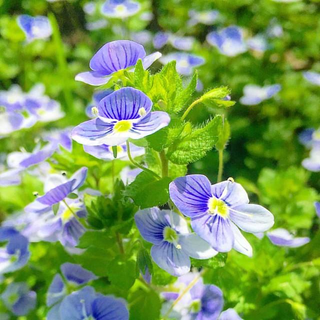 #стрийськийпарк #flower #spring #lviv #ukraine #ponyfony_flowers #quintaflower #flower #flowers #flowergram #flowermagic #flowerpower #floweroftheday #springflowers #flowersofinstagram #flowerslovers #nature #naturelovers #naturephotography
