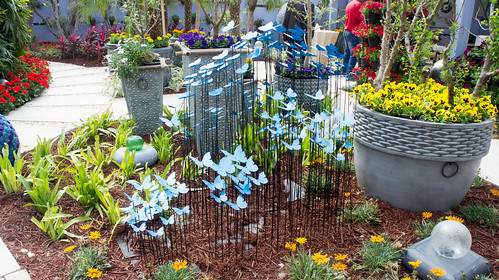 Blue butterflies for your garden