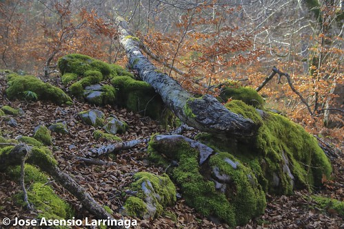 Parque natural de Gorbeia #DePaseoConLarri #Flickr -2804