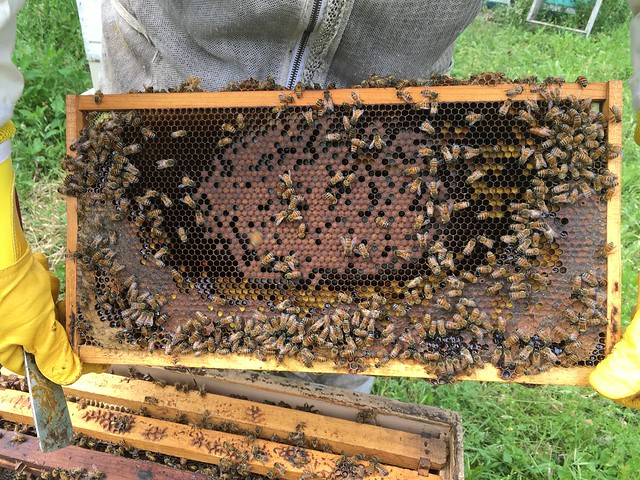 Spring 2016 beekeeping activities