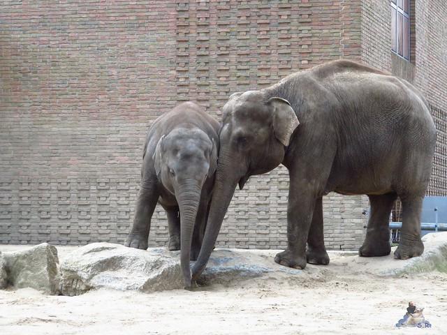 Zoo Berlin 29.04.2016   06