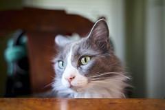 Bobo at the Table