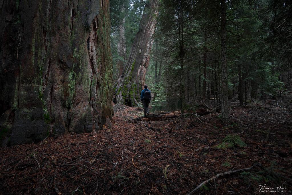 Hiking between giants