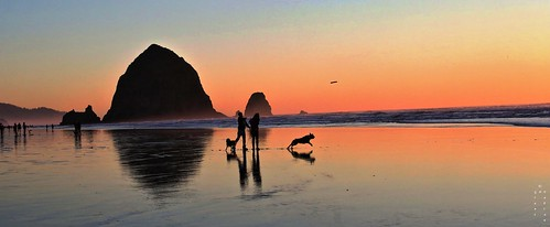 FETCH (Sunset) - flickr cover photo