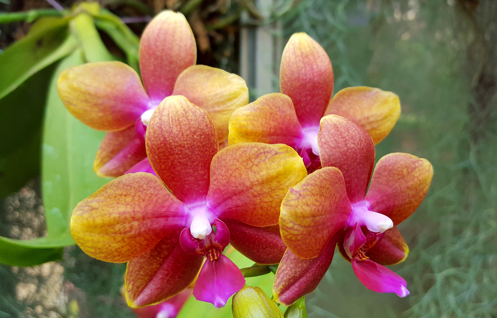 Rainbow Orchids