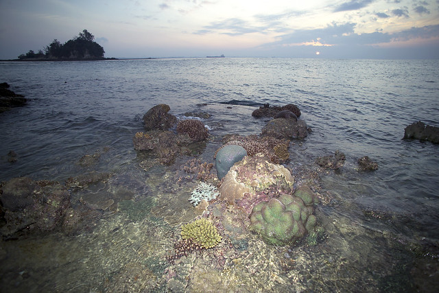Pristine Reefs of Raffles Lighthouse