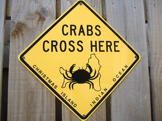 Crabs crossing | by wjusto21