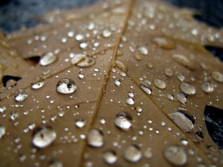 Oak Leaf Raindrops | by peasap