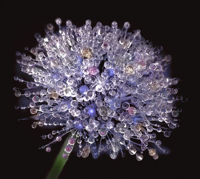 Intricate Detail of Nature's Perfection