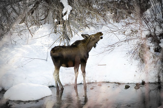 WeberMoose | by Todd Keith