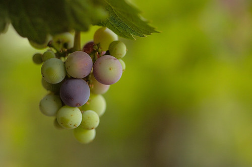 Lefty Grapes | by pecunium