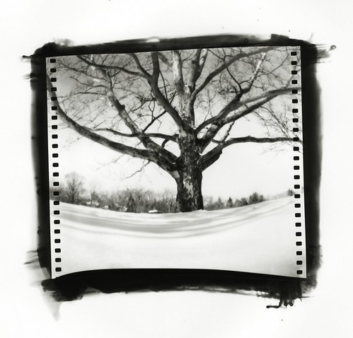 Pinhole: Virginia Park | by Matt Callow