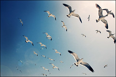 seagulls fly ~ | by yein~