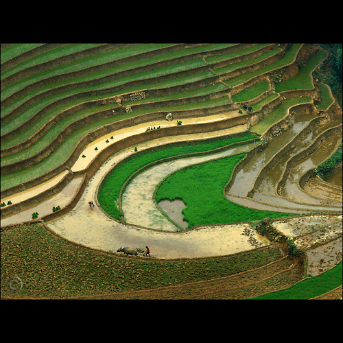 The Eye of the Rice paddies | by NaPix -- (Time out)