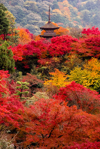 The autumn of Kyoto | by takay
