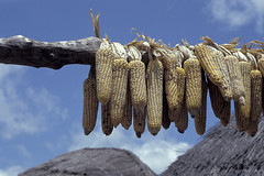 Drying corn | by World Bank Photo Collection