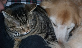 Dogs and Cats Sleeping Together.....Mass Hysteria! | by pmarkham