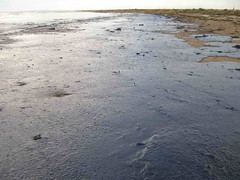 Oil Covering a Beach - Black Sea Oil Spill 11/12/07 | by marinephotobank