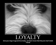 Wee Westie - Loyal Dog | by Randy Son Of Robert