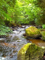 Clare Glens | by IrishFireside