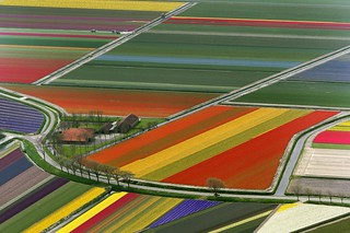aerial view of tulip flower fields, amsterdam, the netherlands | by Paul-J-Brennan