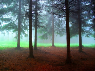 Uros Petrovic - Forest In The Mist | by Uros Petrovic