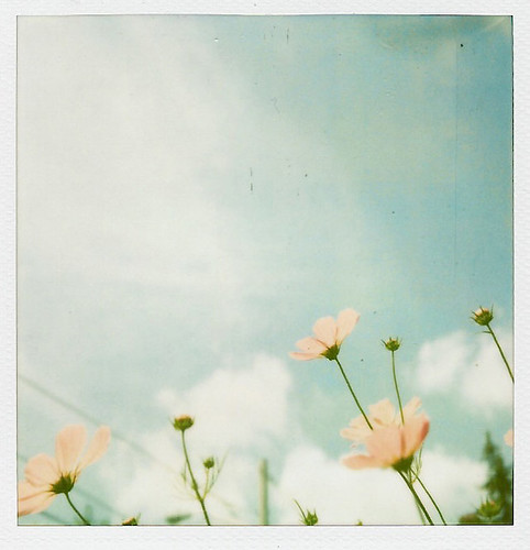 A Little Polaroid Sx-Love ♥ | by Kristybee