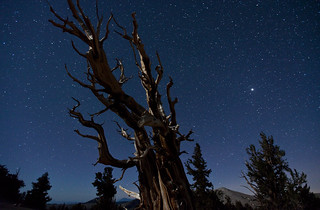 Bristlecone Under a Crescent Moon | by Tom Lowe @ Timescapes
