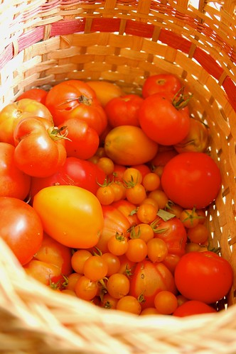 Basket of tomatoes | by danbruell