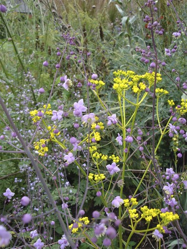 Patrinia scabiosifolia and Thalictrum delaveyii | by James's GW Blog