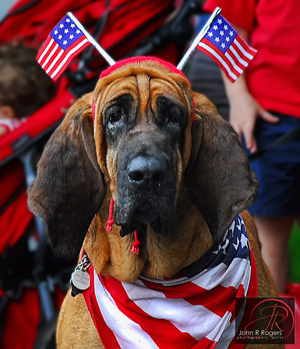 Red, White & Blue Dog Democrat | by John R Rogers