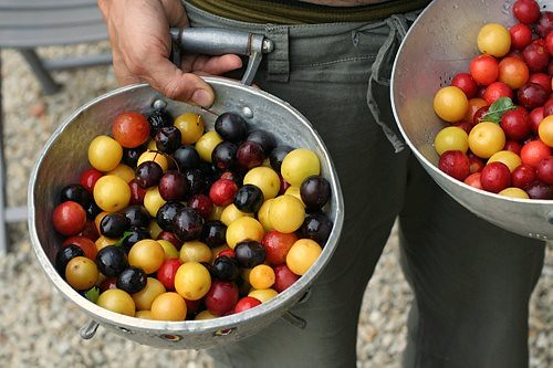 colander of plums | by David Lebovitz